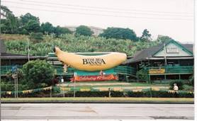C:\Users\shaun\Documents\memory stick\New folder\New Australia\web australia photos\The Big Banana - one helluva walk!.jpg